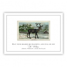 Old Reindeer Greeting Card